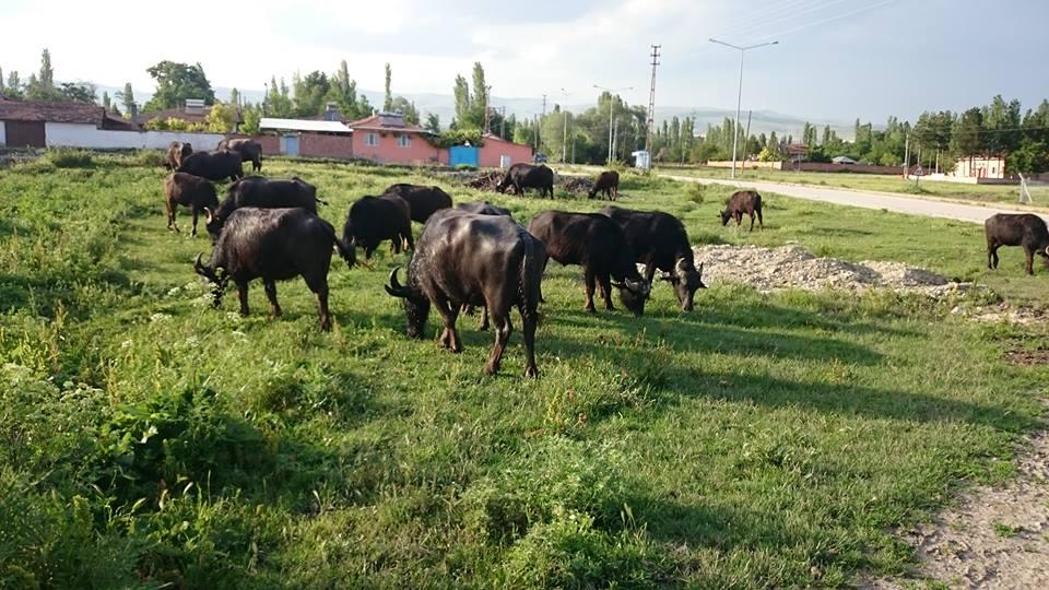 Tarımsal Yayın ve Danışmanlık Hizmeti