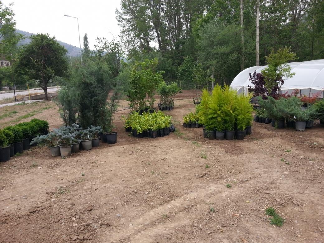 Park ve Bahçe Bitkileri
